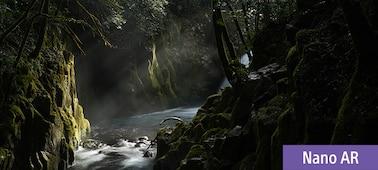 Imagen HR de un bosque al atardecer