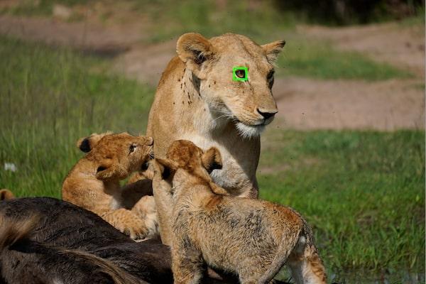 Enfoque automático Eye en tiempo real para animales